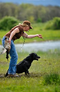 Adrienne Hardin offers retriever training for AKC and UKC in Oregon and Washington state