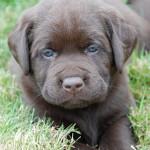 Pup Rosie