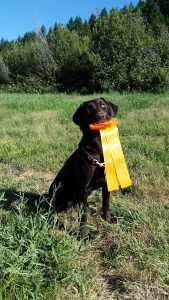 "Rogue's Grind Them Till You Find Them JH, ""Muncie"" with her AKC Hunt Test Ribbon"